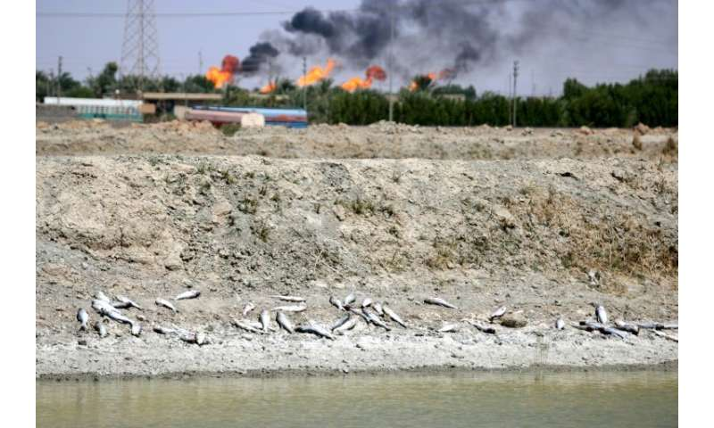 Dead fish lie on the bank of a reservoir at a fish farm north of Basra in southern Iraq with burning oil fields in the backgroun