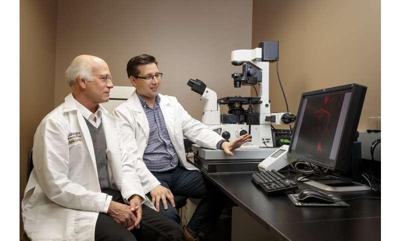 Defect in debilitating neurodegenerative disease reversed in mouse nerves