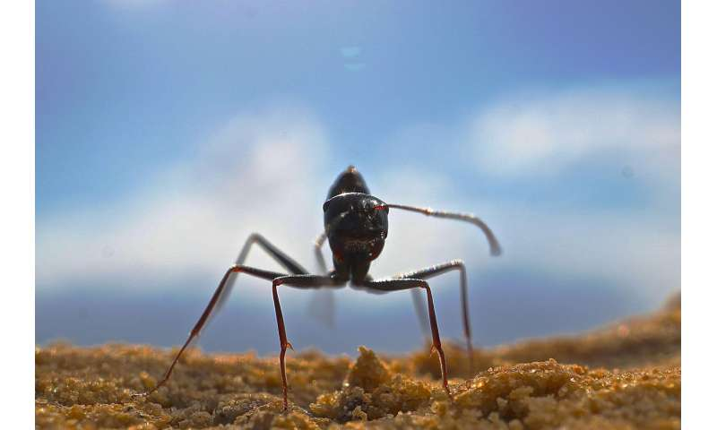 Desert ants have an amazing odor memory
