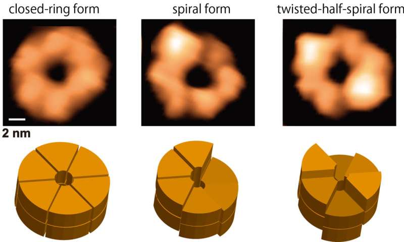 Direct visualization of dynamic structures of protein disaggregation molecular machines