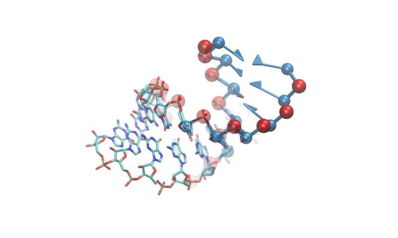 Discovering the structure of RNA