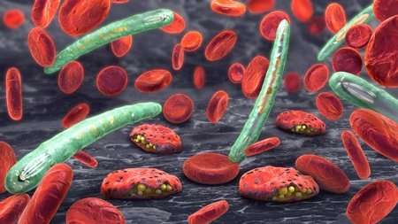 Discovery of novel malaria parasite behaviour offers new target for treatment
