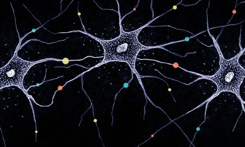 Diversity in the brain -- how millions of neurons become unique