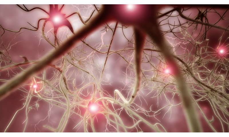 Does an exploding brain network cause chronic pain?