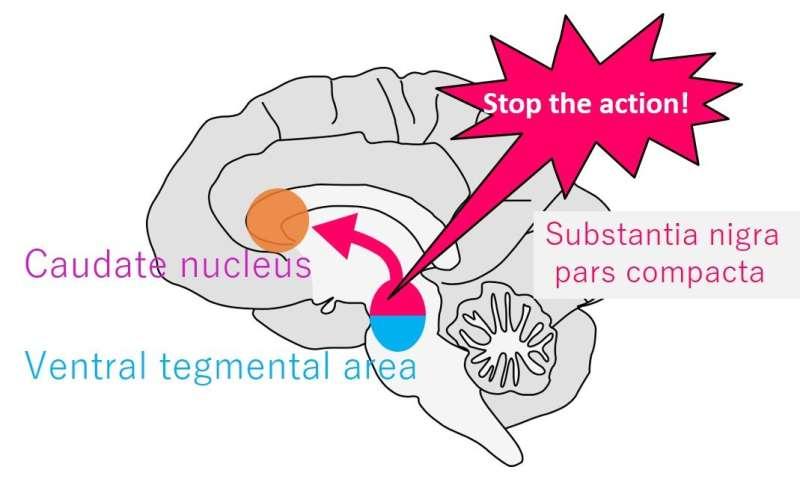 Don't stare! Monkey gaze study shows dopamine's role in response inhibition