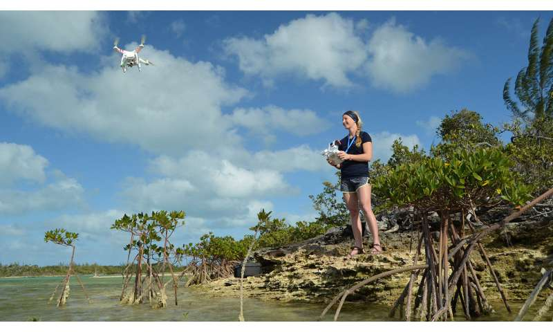 Drones offer ability to find, ID and count marine megafauna