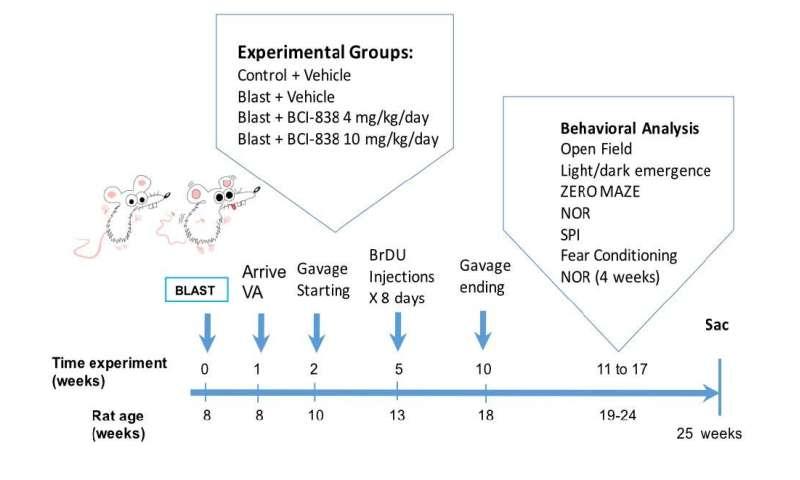 Drug improves PTSD traits in rat model of explosive blasts