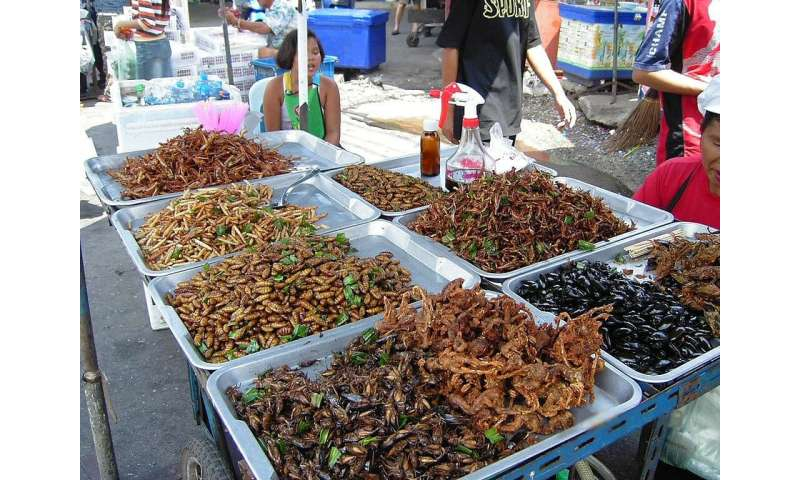 Eating crickets can be good for your gut, according to new clinical trial