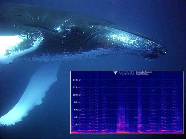 Eavesdropping on the deep