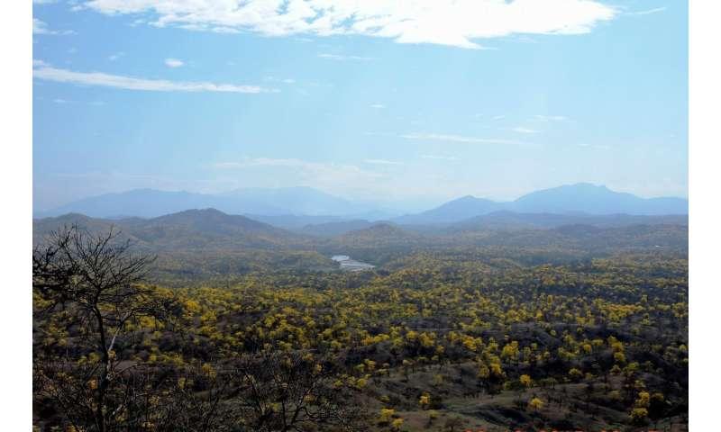 Ecuador: Deforestation destroys more dry forest than climate change