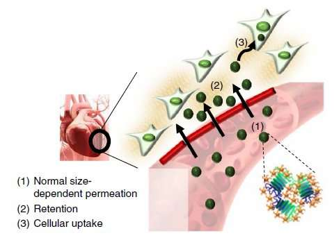 Effective drug delivery to heart with tannic acid