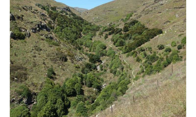 Eight ways to improve native vegetation on private land