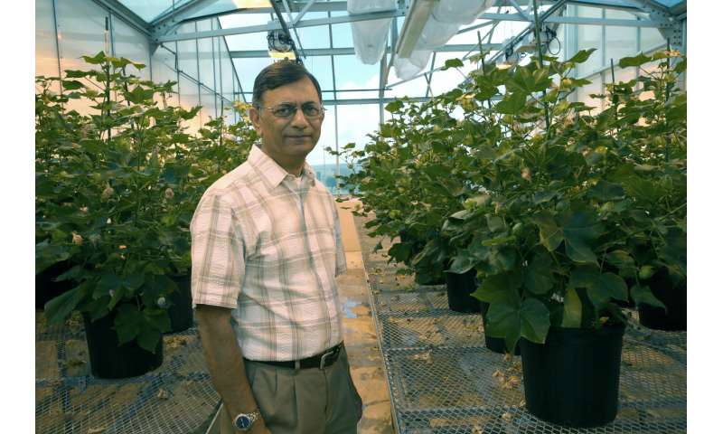 Engineered cotton uses weed-suppression chemical as nutrient