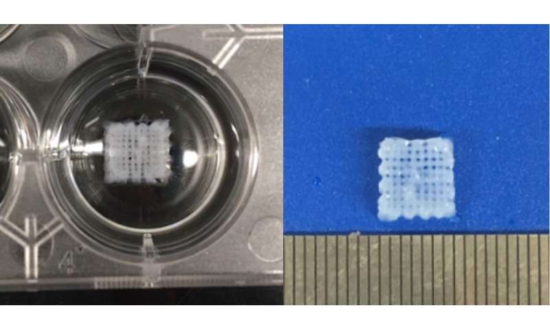 Engineering 3-D bio-printed scaffolds to regenerate damaged peripheral nervous systems
