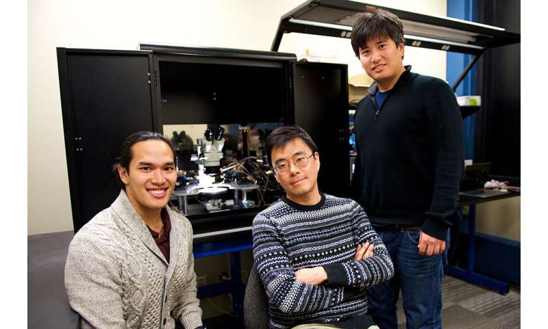 Engineers design artificial synapse for 'brain-on-a-chip' hardware