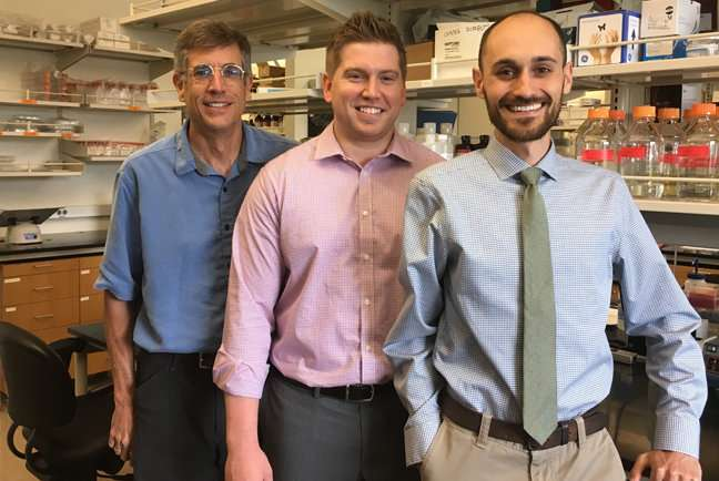Eradicating cancer with immune cells armed with nanorings