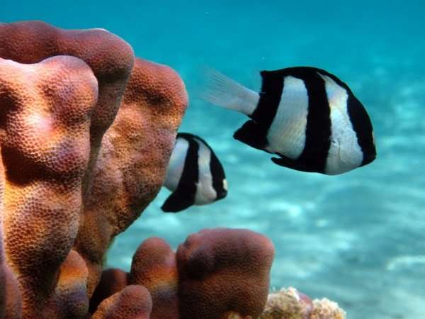 Escape responses of coral reef fish obey simple behavioral rules