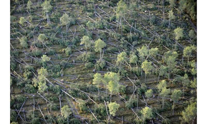 Europe's forests are under threat from extreme weather events, such as droughts and storms, made worse by climate change