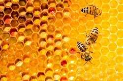 Falling honeybee numbers inspire heat treatments and smart beehives