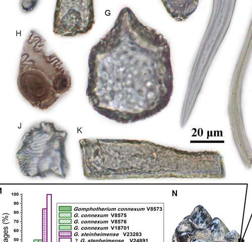 Feeding habits of ancient elephant relatives uncovered from grass fragments stuck in their teeth