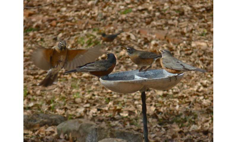 Feeding wildlife can influence migration, spread of disease