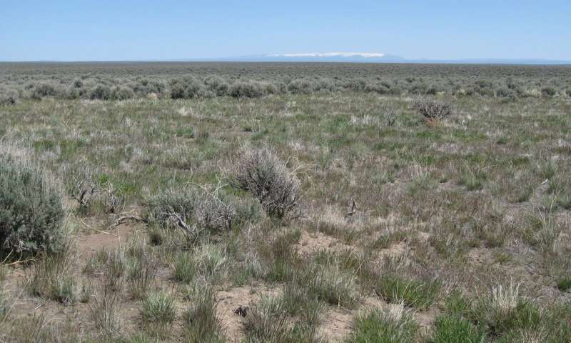 Fire is not all bad news in healthy sagebrush steppe ecosystems