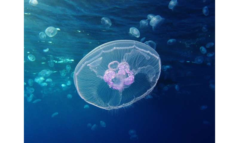 First jellyfish genome reveals ancient beginnings of complex body plan