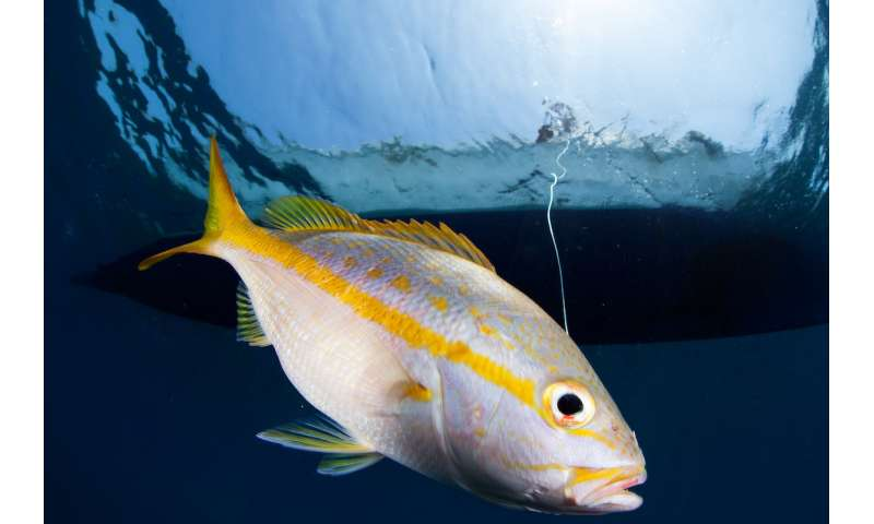Fish body shape holds key to make fishery management cheaper, easier
