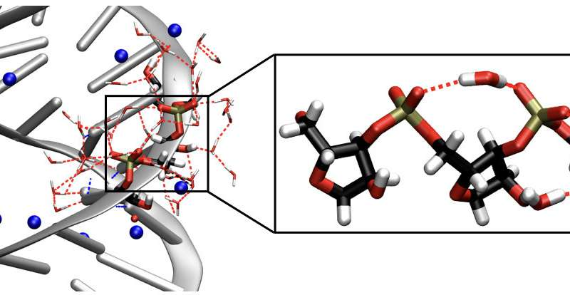 Flexibility and arrangement -- the interaction of ribonucleic acid and water
