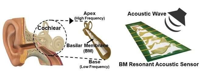 Flexible piezoelectric acoustic sensors for speaker recognition