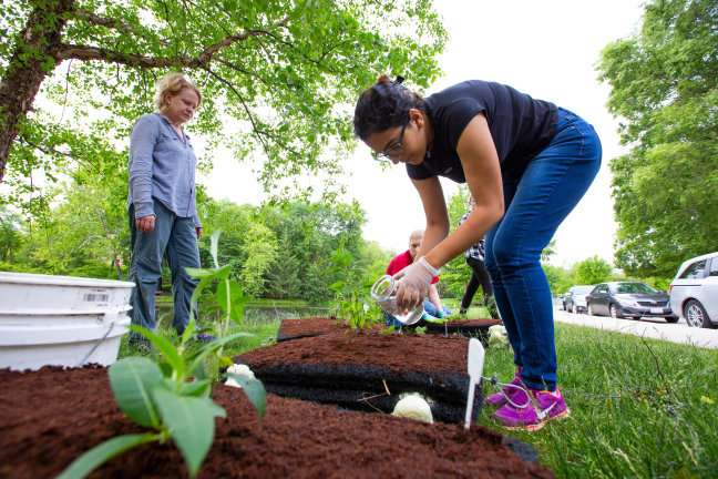 Floating islands project expands on water quality research to study pollinator plants