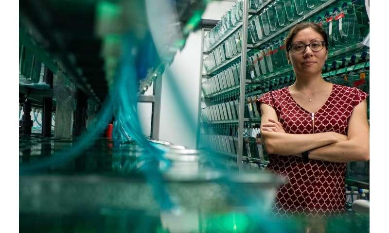 Fluorescent fish genes light path to neuroblastoma