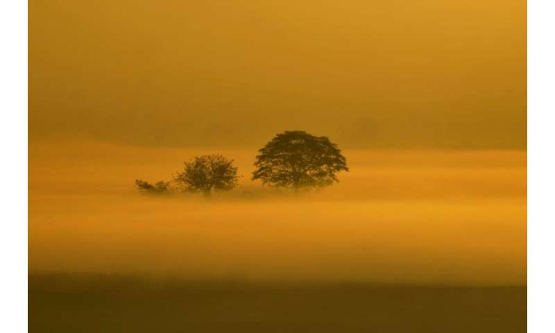 Fog spreads accross an agriculture field in the early morning on the outskirts of the Pakistani city of Lahore on December 4, 20