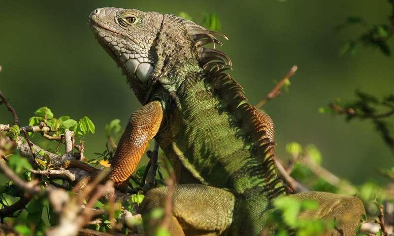 For exotic pets, the most popular are also most likely to be released in the wild