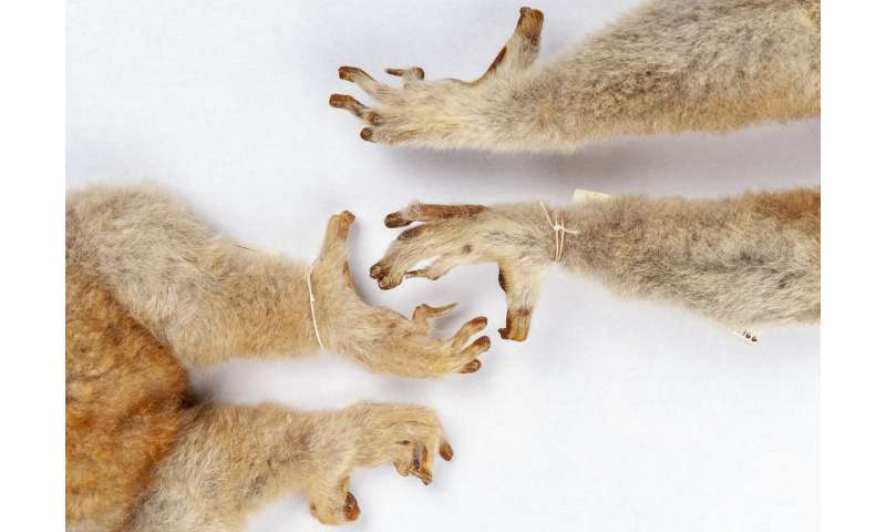 Fossils show ancient primates had grooming claws as well as nails