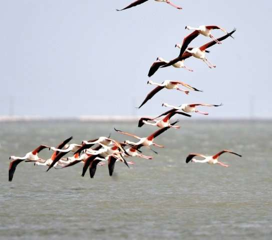 France Nature Environnement filed a complaint for damage to a protected species, saying the disruption of flamingos in the Camar