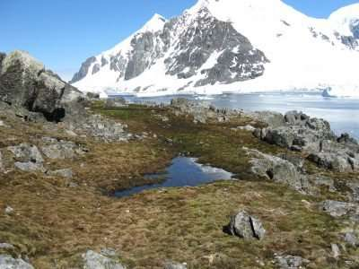 Fungi respire millennium-old carbon from Antarctic soil