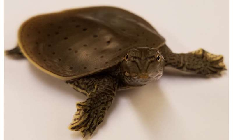 Genome structure of dinosaurs discovered by bird-turtle comparisons