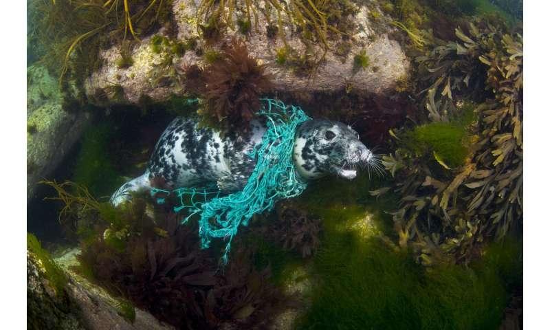 Global effort could cut ocean plastics by 77% by 2025