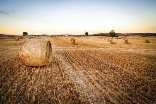 Global study shows environmentally friendly farming can increase productivity