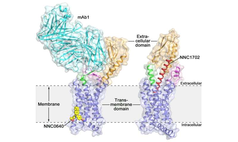 Glucagon receptor structure offers new opportunities for type 2 diabetes drug discovery
