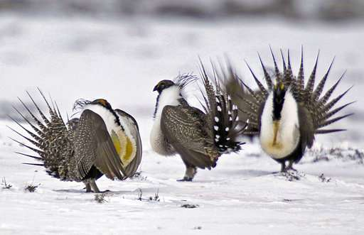 Governors say ban on land deals could hurt beleaguered bird