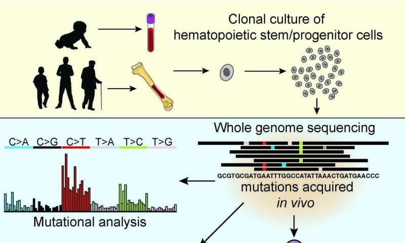 Healthy blood stem cells have as many DNA mutations as leukemic cells