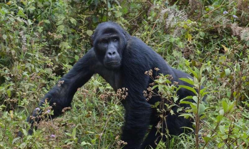 Hidden costs – how infrastructure development may fuel illegal wildlife trade
