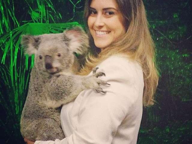 Hidden koala blood parasites offer new clue for their illness