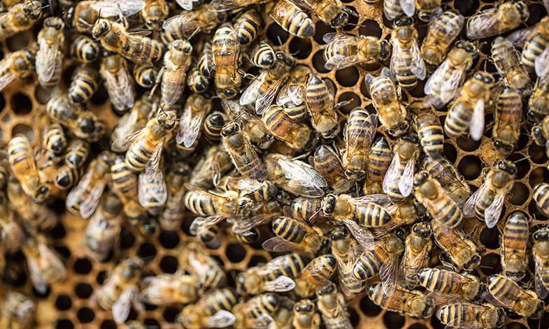 Honeybees may unlock the secrets of how the human brain works