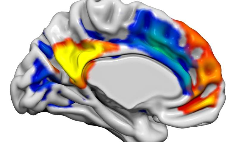 Hormone alters male brain networks to enhance sexual and emotional function