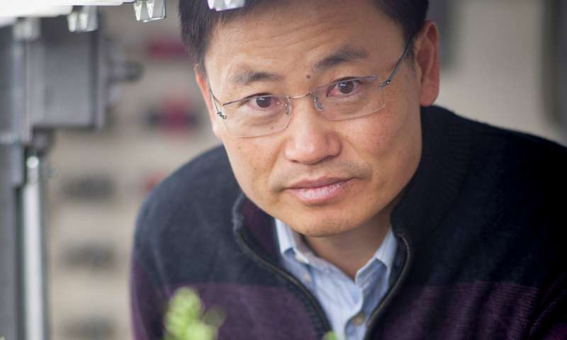 Hormone keys plant growth or stress tolerance, but not both