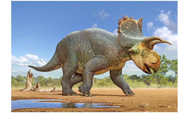 Horned dinosaur Crittendenceratops discovered in arizona