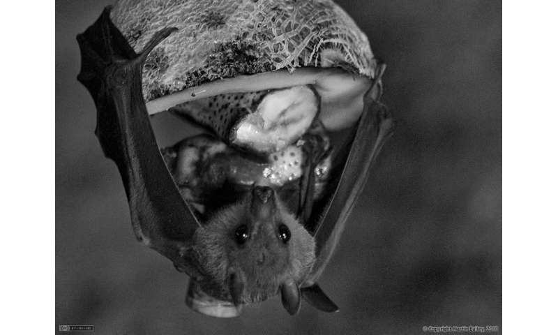 How A bat's brain navigates